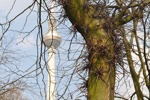 Stacheln am Baum