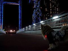 09040540 (Thomas Overfield) Tags: tokyo  koutou  blogs090405