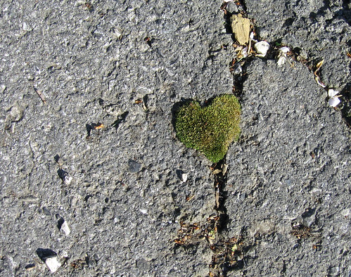 heart shaped moss
