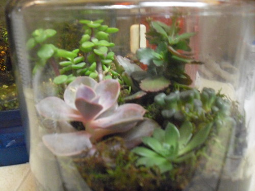 My Second Terrarium alt view