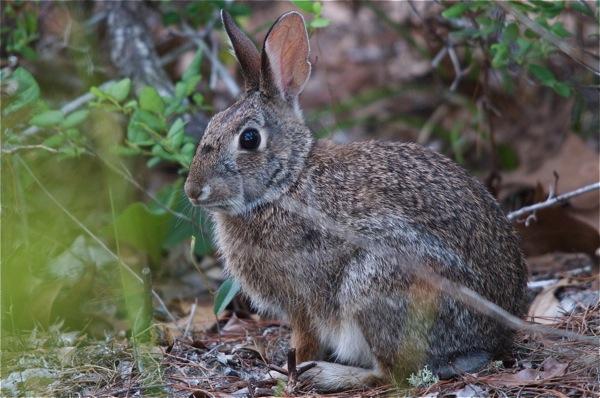 rabbit_0141