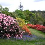 Beginning of Middle Walk, Leonardslee Gardens thumbnail