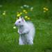 The Albino Squirrel In Surrey Dorking - RIP