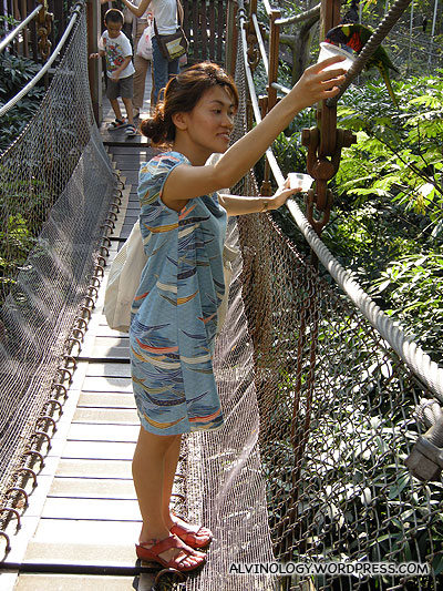 Feeding the lories on a suspension bridge