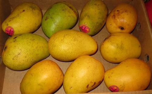 Ataulfo (Champagne) Mangoes