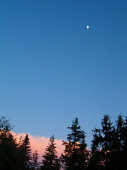 SunsetScape (Hawk of the Morning) Tags: trees sunset sky moon pinkclouds