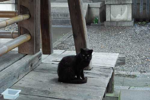 Today's Cat@20090706