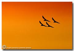 Freedom (ibrahem N. ALNassar) Tags: 30 canon eos freedom d n usm ef 400mm      alnassar f56l     ibrahem