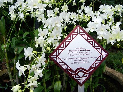 NOG - celebrity orchids