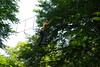 IMGP3318 (strongwater) Tags: dave jan bo velbert klettern witte klimmen svenja ilka luza strongwater waldkletterpark