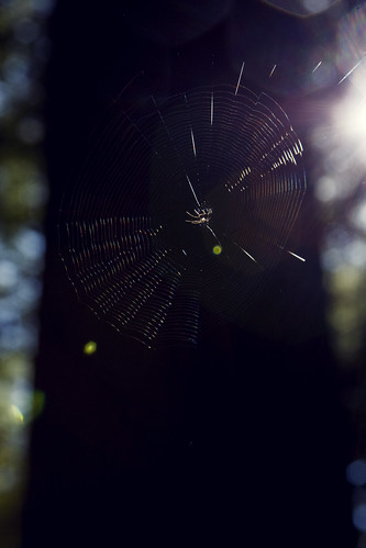 Web [216/365]