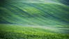 farmers carpet (Dennis_F) Tags: italien italy mist green nature lines fog zeiss landscape carpet spring italia dof nebel sony country hill landwirtschaft natur tracks spuren traces hills tuscany farmer grün agriculture fullframe dslr toscana valdorcia landschaft hilly teppich frühling 135mm toskana hügel linien 13518 a850 sonyalpha sonydslr vollformat cz135 zeiss135 dslra850 sonya850 sonyalpha850 alpha850 tuscien sony135 sonycz135