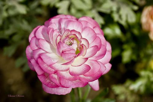 Hoa đẹp khoe sắc giữa thiên nhiên