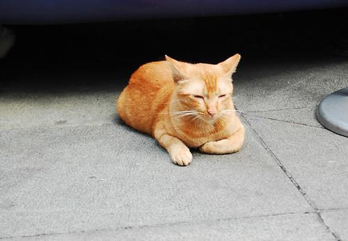 smallcat