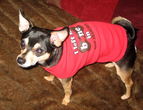 Diego sporting his I left my bone in San Francisco dog tank top