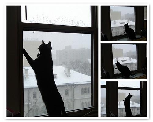 kati watching snow