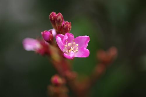Carl Zeiss Jena Biotar 58mm f/2.0 (M42) On Flowers