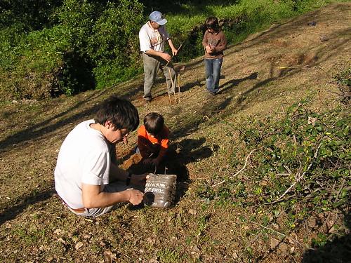 Forestació l'any 2009 a la Baixada del mas, segada posteriorment per la brigada netejadora