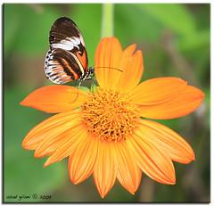 a butterfly playground (iCamPix.Net) Tags: flower canon butterfly soe pianokey naturesfinest 8869 ultimateshot vosplusbellesphotos markiii1ds