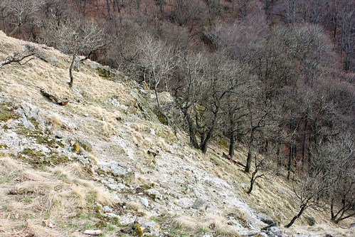 Dunakanyar, 2009. 03. 21. 0019