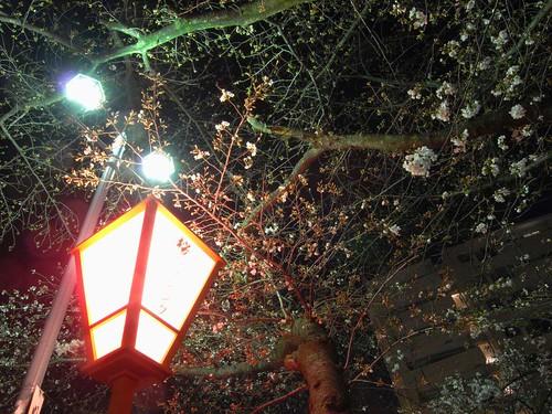 09-03-24【桜】@大和高田
