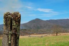 Mossy Fencepost