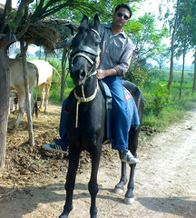 Singh Riding on Hourse (jas-B) Tags: horse india green cow village riding haryana boora hissar jaat