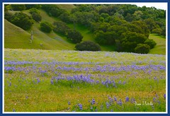 Ranchland to Parkland (dianejp) Tags: california ranch park blue trees mountains nature landscape spring hiking scenic hills wildflowers centralcoast oaks naturalbeauty