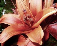 .çiçek. ('sema) Tags: makro deneme ilk çiçek güneş teşekkürler addictedtoflickr