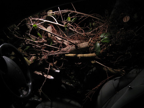 unidentified branches in 2000 Ford Focus hatchback