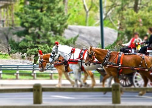 Central Park Horse Race