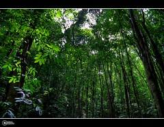 ManMade Forest of Bohol | Explore (rev_adan) Tags: morning trees black green nature forest canon way island highway december philippines explore shade adan bohol manmade tall carmen motherearth mainland eso vaction revo reforestation 40d revadan vosplusbellesphotos oplok