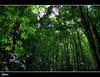 ManMade Forest of Bohol   Explore (rev_adan) Tags: morning trees black green nature forest canon way island highway december philippines explore shade adan bohol manmade tall carmen motherearth mainland eso vaction revo reforestation 40d revadan vosplusbellesphotos oplok