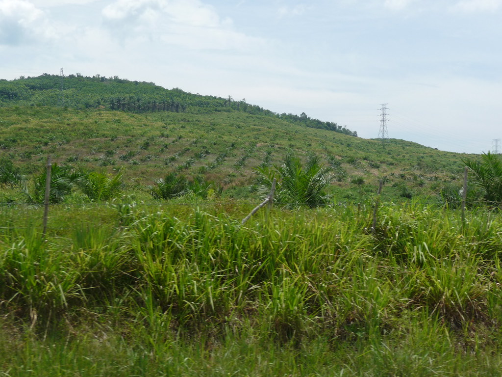 Palm Oil (2)