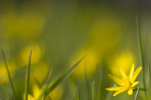 Flower dream (by Hamsteren)