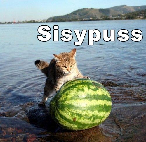 Sisypuss