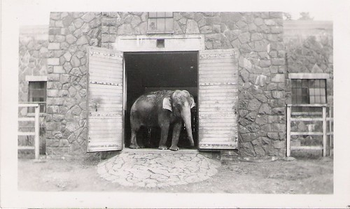 sad looking elephant