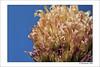 Against blue (Thomaniac) Tags: pink blue white flower macro closeup canon eos spring flora blossom natur rosa blau blume blüte weiss nahaufnahme frühling efs60mmmacro lens00025 450d thomaniac