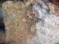 Serpent coral bleaching