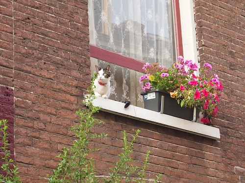 Amsterdam: cat-spotting
