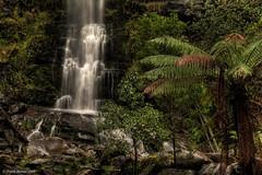 Erskine Falls (moronif) Tags: fern tree nature waterfall moss rainforest australia victoria falls greatoceanroad lorne flowingwater erskinefalls greatotwaynationalpark