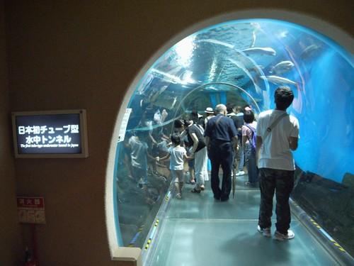 須磨海浜水族園-10