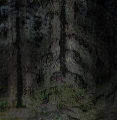 tanke, dikt, skog, mörk, dyster, hopfull, mörker, ljus, rörelse, förändring, utvägar