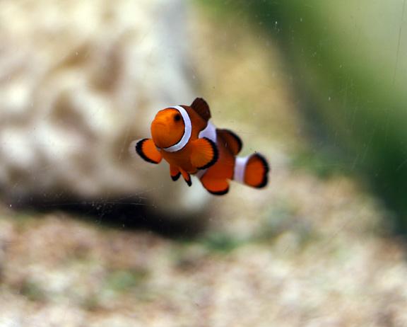aquarium nemo