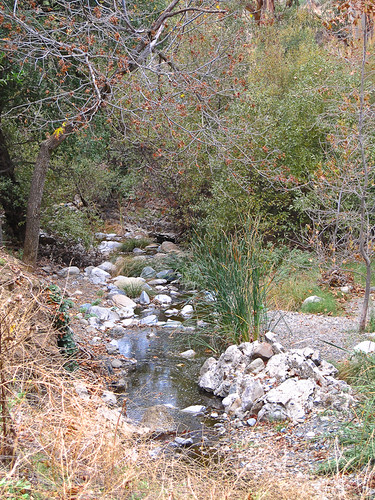 Alum Rock Creek