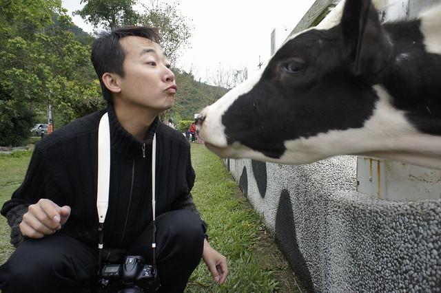 Cow: ......