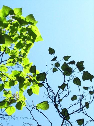 Hojas con sol, hojas con sombra 2 by JoseAngelGarciaLanda