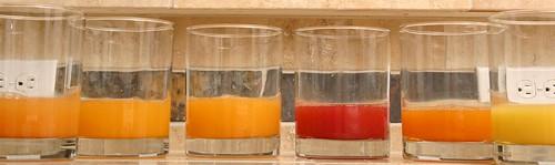Orange Juice Tasting