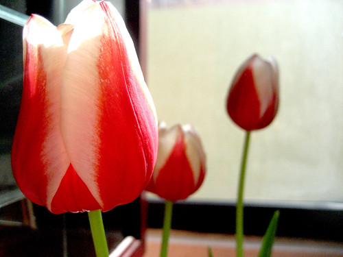 Of Tulips and Remains