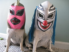 Las Pugs Enmascaradas